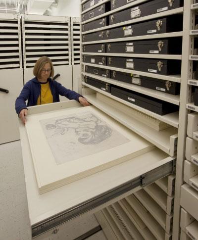 Montel art museum storage at Harvard Fogg